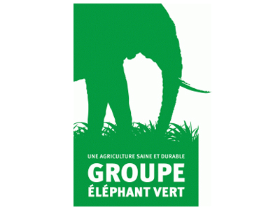 EBIC Elephant Vert